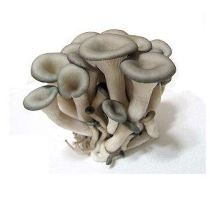 느타리버섯/oyster mushroom 300g