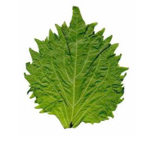 Siso Leaves [2bundle]