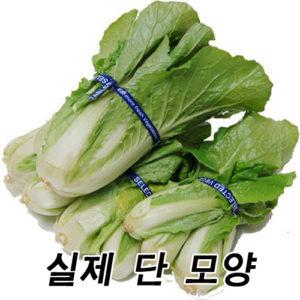애기배추 5단-금,토 배달시 가능